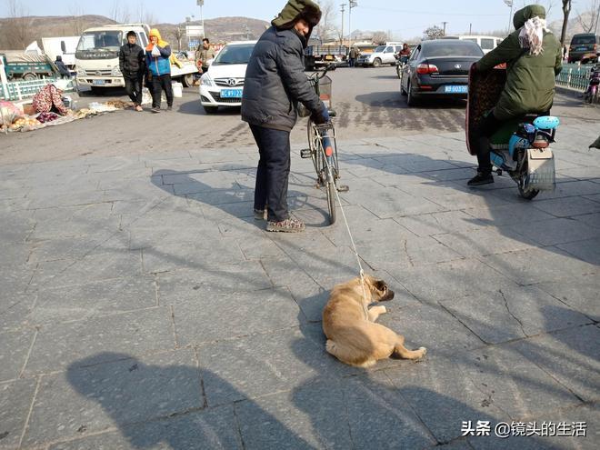 農村大爺賣兩隻土狗,8個月大狗子死活不願跟新主人走,看咋回事