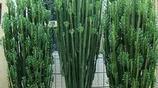 還在養吊蘭綠蘿?要養就養這種綠植,吸甲醛還防輻射,關鍵還好養
