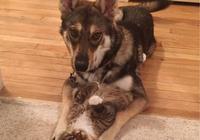 狗狗對流浪貓一見鍾情,央求主人收養它, 帶回家後每天幸福擼貓