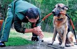 軍人與軍犬的有愛瞬間,看到哪張你淚奔了……