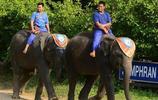 大象:大象的分佈區域