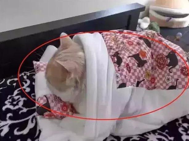 自從給貓咪買了小床後,被它睡被窩的樣子迷住了