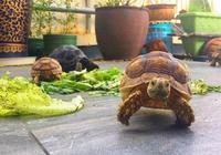 一群散步的小烏龜