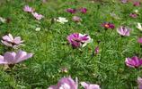 春天賞花:行走中賞花拍花,你認識幾種呢