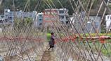 農村留守婦女農業園區打工,日綁豆架數千棵只掙得工錢50元,她們卻很滿意,能掙錢還能在家照顧老人和小孩