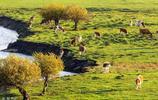 內蒙古大草原