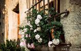 別再養綠蘿吊蘭了,此花好養又漂亮,扔花盆就能活,四季花開不斷