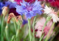 青色琉璃,近距離看花窒息的美