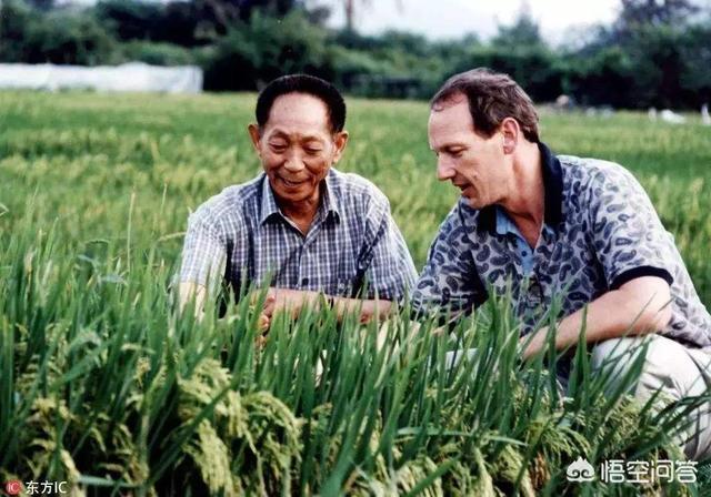 莫言得諾貝爾文學獎跟袁隆平的雜交水稻技術,對人類的貢獻而言誰更重要?