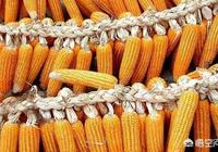 近期東北地區的玉米為什麼出現上漲?東北地區的玉米價格能漲到0.95元/斤的行情嗎?