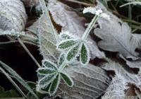 冬天,在詩詞的世界裡美得任性!一起在詩詞中感受冬日之美