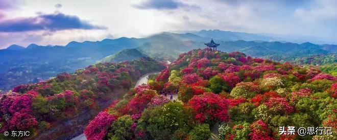 我國春天最美的油菜花、桃花、櫻花、杏花、梨花、杜鵑花賞花攻略