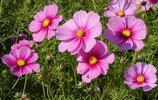 """你在公園裡常見的這種花,花語是""""憐惜眼前人""""——摘一朵送給他"""