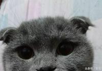 撿回一隻小黑貓,隔天有隻一模一樣找上門