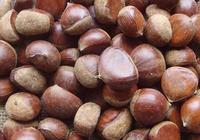 板栗價格多少錢一斤 板栗的選購方法是什麼