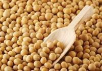 今年國產大豆的產量和價格怎樣?