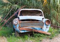 為了避免暴晒,能將車停在樹蔭下嗎?修車師傅:比暴晒更傷車漆
