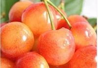 又到了吃櫻桃的季節,在諸多品種和價格中,你喜歡吃哪個品種?通過什麼途徑購買?