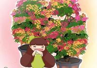 養花還在買土,這6種可是不花錢的寶貝,疏鬆透氣營養多