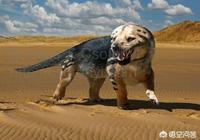 哺乳動物是何時開始出現的?
