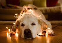 當狗狗出現這三個徵兆,說明它們正步入老年,珍惜最後的時光