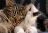 小貓吃消炎藥後軟便?怎麼治療幼貓的軟便?