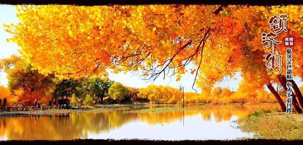一路向西,追足秋色,魂歸額濟納
