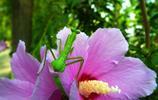 動物圖集:螳螂