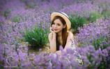 薰衣草的美麗