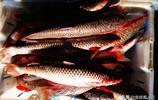 開凌梭活八帶小明蝦 菜市場海鮮花樣不多 平常家庭也夠用