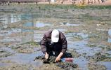 青島:棧橋景區成趕海勝地 蛤蜊海蠣子啥都能挖到