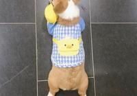 狗子需要穿衣服保暖嗎?還是有一種冷叫你媽覺得你冷呢