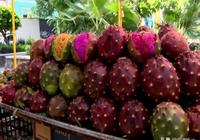 在國內遭到嫌棄的水果,在國外卻受到了追捧,價格昂貴還搶著買
