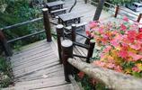 「實拍」滿目楓情!濟南南部山區紅楓正當時,吸引遊人前來觀賞