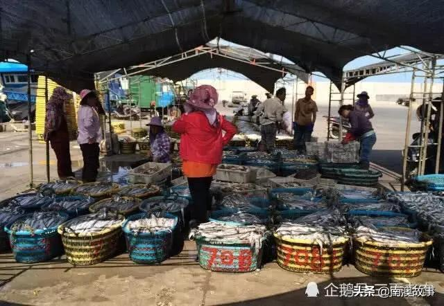 碼頭最廉價的海鮮,一斤6元按筐賣,市場一斤40元貴得吃不起