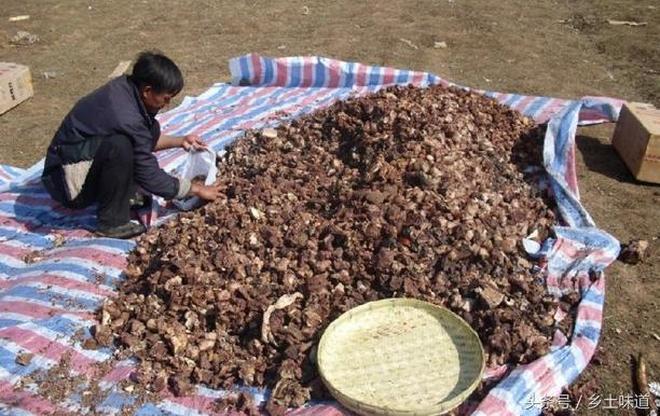 實拍涼山彝族農村葬禮:宰殺牛羊百餘頭,上千人現場分牛肉