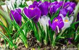 世界上最美麗的10種花,有些花一輩子難得一見