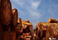"""紅木更換""""朝代"""",一覽非洲紅木資源"""