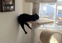 為什麼貓咪會喜歡貓薄荷?網友分享家中貓咪遇到貓薄荷的照片(一)