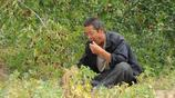 秋收農民忙起來早出晚歸一天只吃一頓飯,餓了地邊摘棗一天吃兩斤