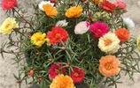 陽臺別再養綠蘿了!聰明女人都在家養這8種盆栽花卉,滿屋子飄香
