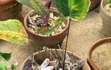 """鏟屎的!快來看18 種你從未見過的""""貓盆栽"""""""