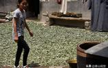 河南山村老人專採這種草,坐家裡一天賺幾十,你見過這種草嗎?