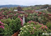 廣西隆安準備去貴州旅遊,有哪些好玩的地方?