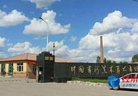 哈爾濱尚志:中國黑木耳之鄉
