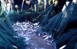 """一到夏天這種""""白魚""""就在水裡翻滾著,有著極強的繁殖能力"""