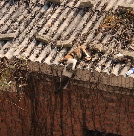 落井下石的花貓對同伴下黑手,網友:說不定這是一部愛情倫理劇