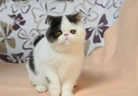 加菲貓日常生活飲食盤點!