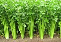乙肝宜吃什麼蔬菜 乙肝宜吃哪些蔬菜