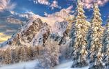 風景圖集:唯美的雲杉雪景